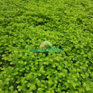 Reu Langbiang Farm
