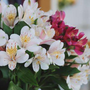 thủy tiên mặt hoa