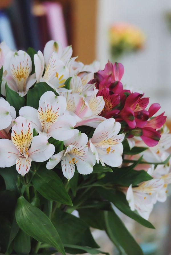 Hoa thuy tien Langbiang Farm