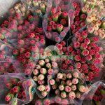 Hoa cẩm chướng hinh mat bong 5