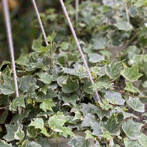 Các loại lá